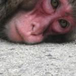 猿ぐったり