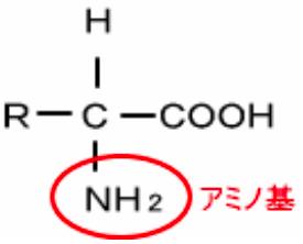 アミノ酸化学式