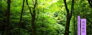 forest_observation